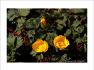봄꽃 만발 꽃대궐이 된 물향기수목원
