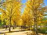 괴산 문광저수지의 노란 가을