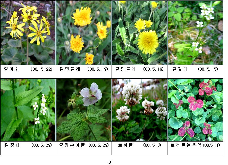 봄에 피는 야생화(5월-21)