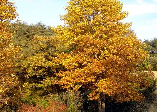 튜립나무 이야기