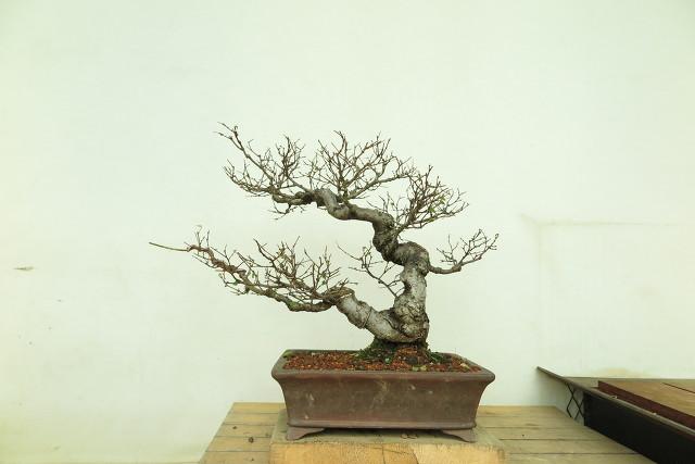 느티나무 잎따기